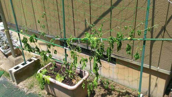 石橋菜園2