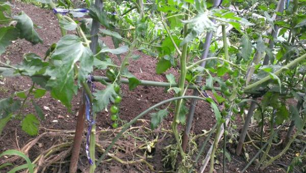 石橋菜園1